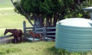5000 gallon 9000 litre rainwater tank in paddock with horse and foal