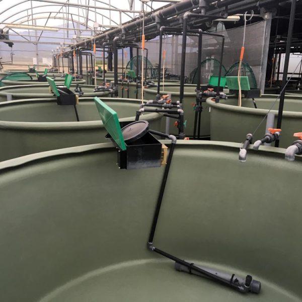 AP2500-2-Poly-Aquaculture-Tank